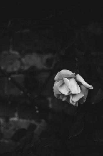 Flowers Don't Last Forever